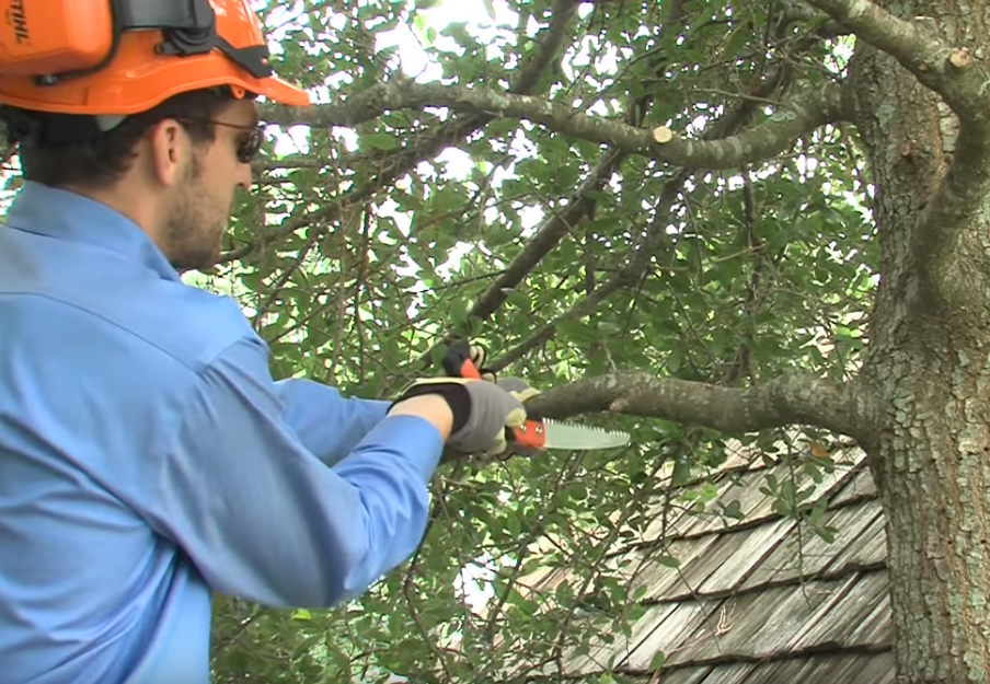 How To Prune Trees & Plants: Using STIHL